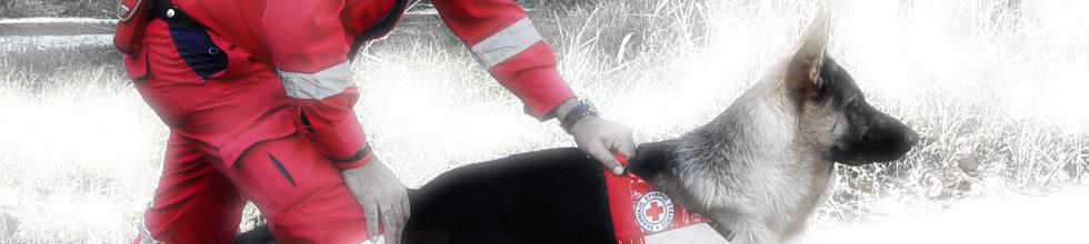 Σε τι εκπαιδεύονται οι σκύλοι του Ερυθρού Σταυρού;